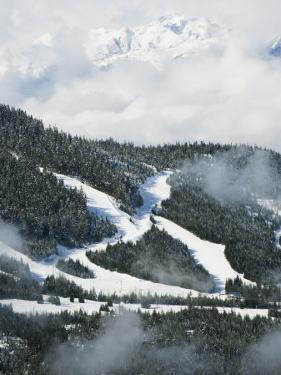 Tree Lined Ski Slopes, Whistler Mountain Resort by Christian Kober