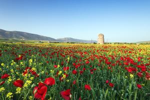 Turkey, Eastern Anatolia, Hasankeyf by Christian Kober