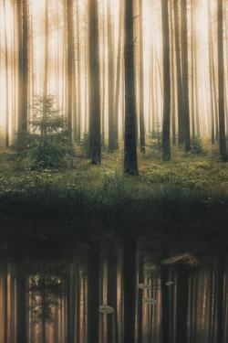 Reflection in the Foggy Forest by Christian Lindsten