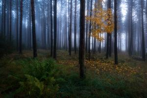 The Dark Light by Christian Lindsten