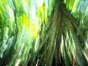 Stilt Root of a Walking Palm, Borro Colorado Island, Panama by Christian Ziegler