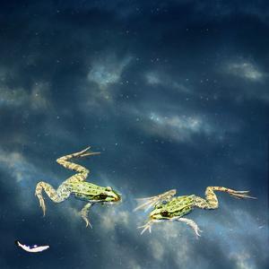 Frogs by Christiana Stawski