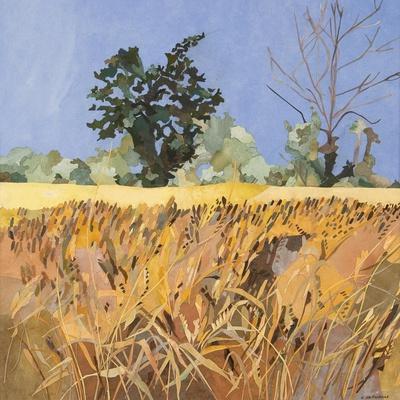 Southolt Corn Field