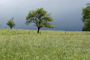 Stormy atmosphere in the country, fruit-trees by Christine Meder stage-art.de