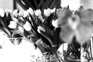 Tulips in glass vases by Christine Meder stage-art.de