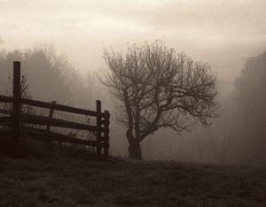 Mountain Meadow Farm by Christine Triebert