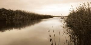 River Reeds by Christine Triebert
