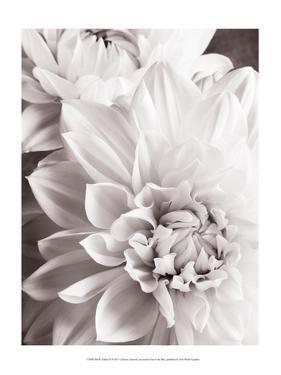 Black and White Dahlias II by Christine Zalewski