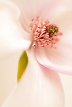 Blooming I by Christine Zalewski