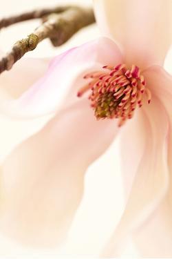 Blooming II by Christine Zalewski