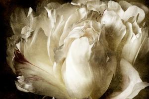 Elegant Peony I by Christine Zalewski