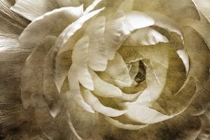 Elegant Peony III by Christine Zalewski