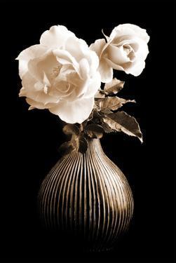 Lighted White Roses by Christine Zalewski