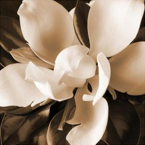 Magnolia Close Up I by Christine Zalewski