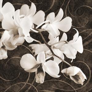 Orchid and Swirls II by Christine Zalewski