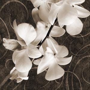 Orchid & Swirls I by Christine Zalewski