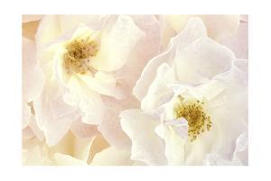 Pink Blossoms II by Christine Zalewski