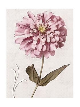 Pink Zinnia I by Christine Zalewski