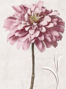 Pink Zinnia II by Christine Zalewski
