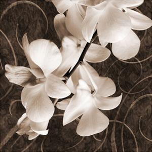 Sepia Orchid I by Christine Zalewski