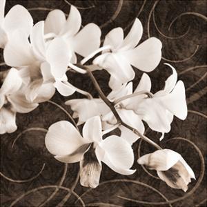 Sepia Orchid II by Christine Zalewski