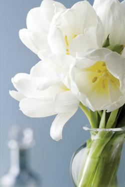 White Tulips Bouquet by Christine Zalewski