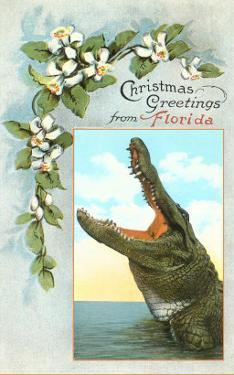 Christmas Greetings from Florida, Alligator