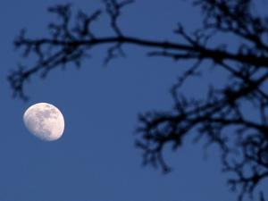 Moon and Branches by Christoph Hetzmannseder