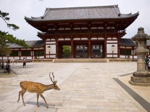 Deer Strolling Past Entrance Gate to Todai-Ji (Temple) by Christopher Groenhout