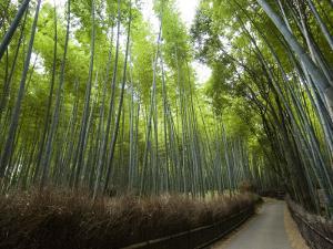 Path Leading Through Bamboo Forest Near Nonomiya-Jinja Shrine by Christopher Groenhout