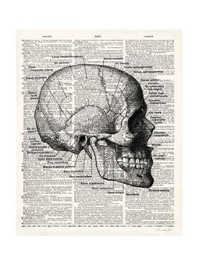 Vintage Anatomy Skull by Christopher James