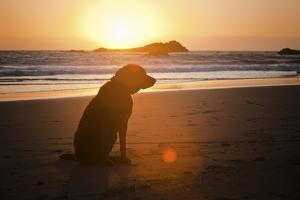 Dog at Beach by Christopher Kimmel