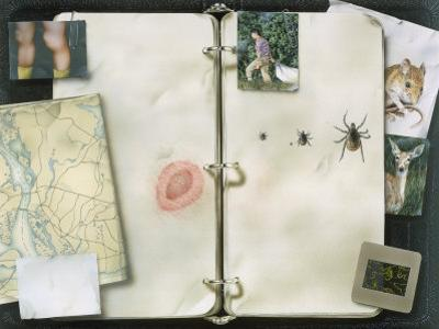 This Artwork is Called Lyme Disease Trail by Christopher Klein