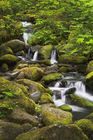 USA, Oregon, Hood River. A waterfall on Tish Creek.