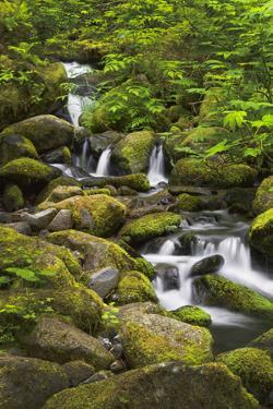 USA, Oregon, Hood River. A waterfall on Tish Creek. by Christopher Reed