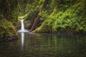 USA, Oregon, Hood River. Punch Bowl Falls along Eagle Creek in the Columbia River Gorge. by Christopher Reed