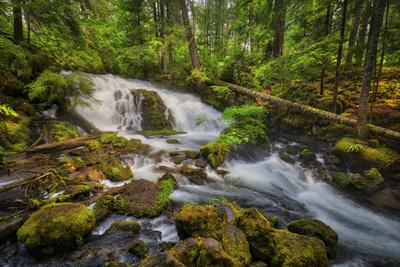 USA, Oregon, Prospect. Pearsony Falls near the Prospect State Scenic Viewpoint.