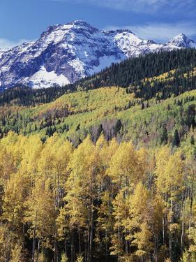 Colorado, Rocky Mts, Aspen Trees Below a Mountain Peak in Fall by Christopher Talbot Frank