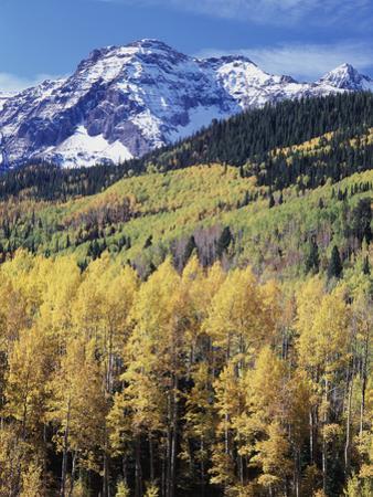 Colorado, Rocky Mts, Aspen Trees Below a Mountain Peak in Fall