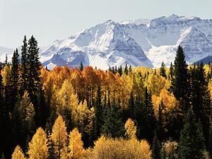 Colorado, San Juan Mountains, Autumn Aspens Below Snowy Mountains by Christopher Talbot Frank