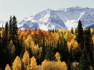 Colorado, San Juan Mountains, Autumn Aspens Below Snowy Mountains by Christopher Talbot Frank