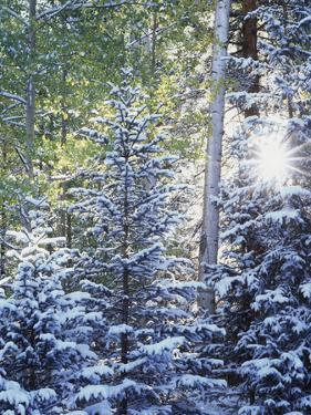 Colorado, San Juan Mountains, First Snow in the Forest by Christopher Talbot Frank