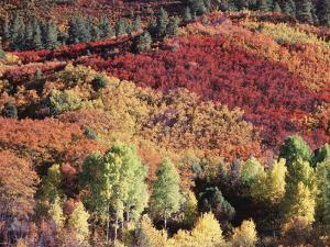 Colorado, San Juan Mountains, Uncompahgre Nf, Autumn Colors by Christopher Talbot Frank