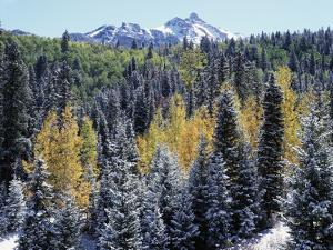 Colorado, San Juan Mts, First Snow and Fall Colors of the Forest by Christopher Talbot Frank