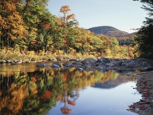 New Hampshire, White Mts Nf, Sugar Maple Reflect in the Swift River by Christopher Talbot Frank