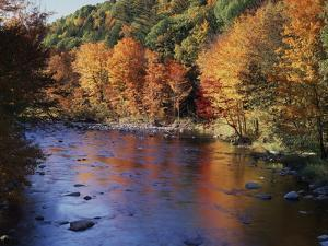 New Hampshire, White Mts Nf, Sugar Maples and Wild Ammonoosuc River by Christopher Talbot Frank