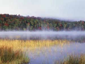 New York, Adirondack Mts, Fall Trees Reflecting in a Pond by Christopher Talbot Frank