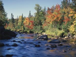 New York, Adirondack Mts, Sugar Maple Trees Along the AUSAble River by Christopher Talbot Frank