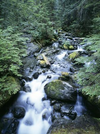 Strathcona Park, Vancouver Island, a Creek Flowing in the Rainforest