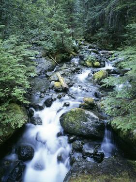 Strathcona Park, Vancouver Island, a Creek Flowing in the Rainforest by Christopher Talbot Frank